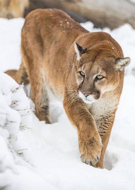 Animal Ark Wildlife Sanctuary, Animal Ark WIld Winter Weekend Feb 2018
